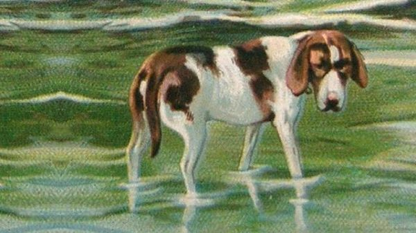A painting of a dog paddling in the sea