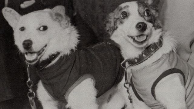 Belka And Strelka The First Animals To Return From Space
