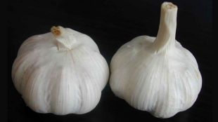 Garlic Offers Protection Against Vampires